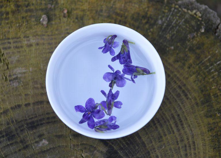 3_EnPRATIQUE_3_jardinHERBO_violette